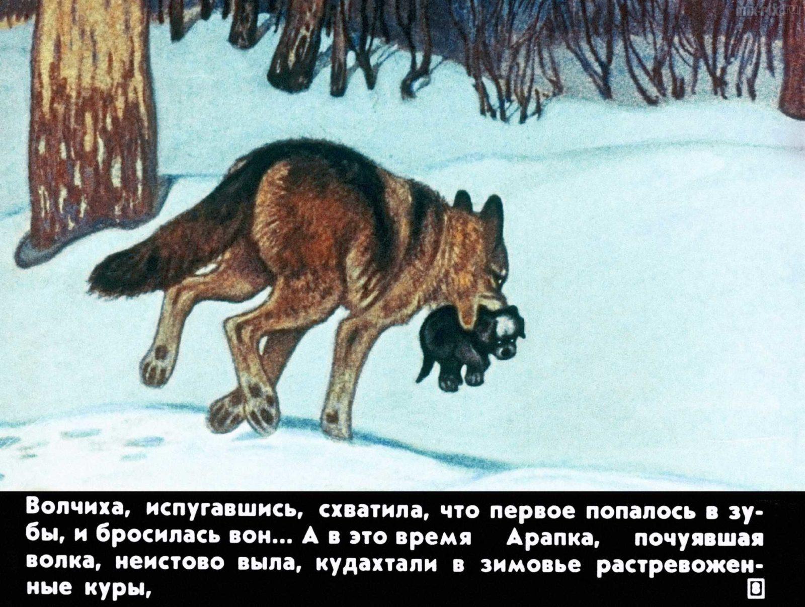 Белолобый (1988) 20
