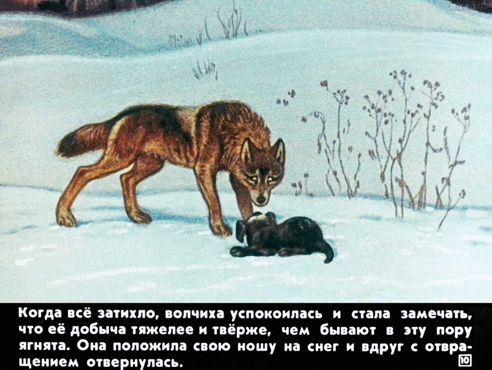 Белолобый (1988) 21