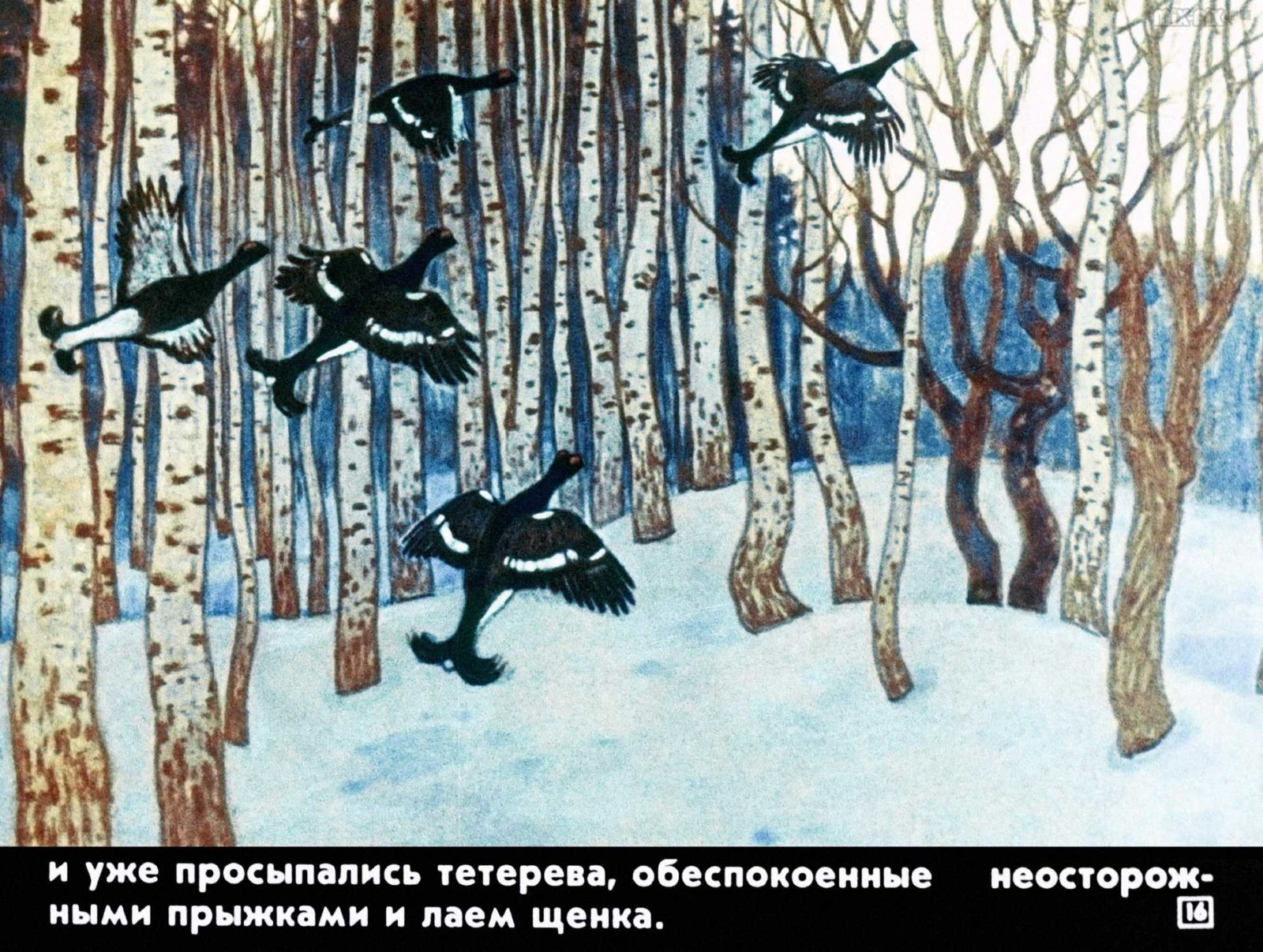 Белолобый (1988) 23