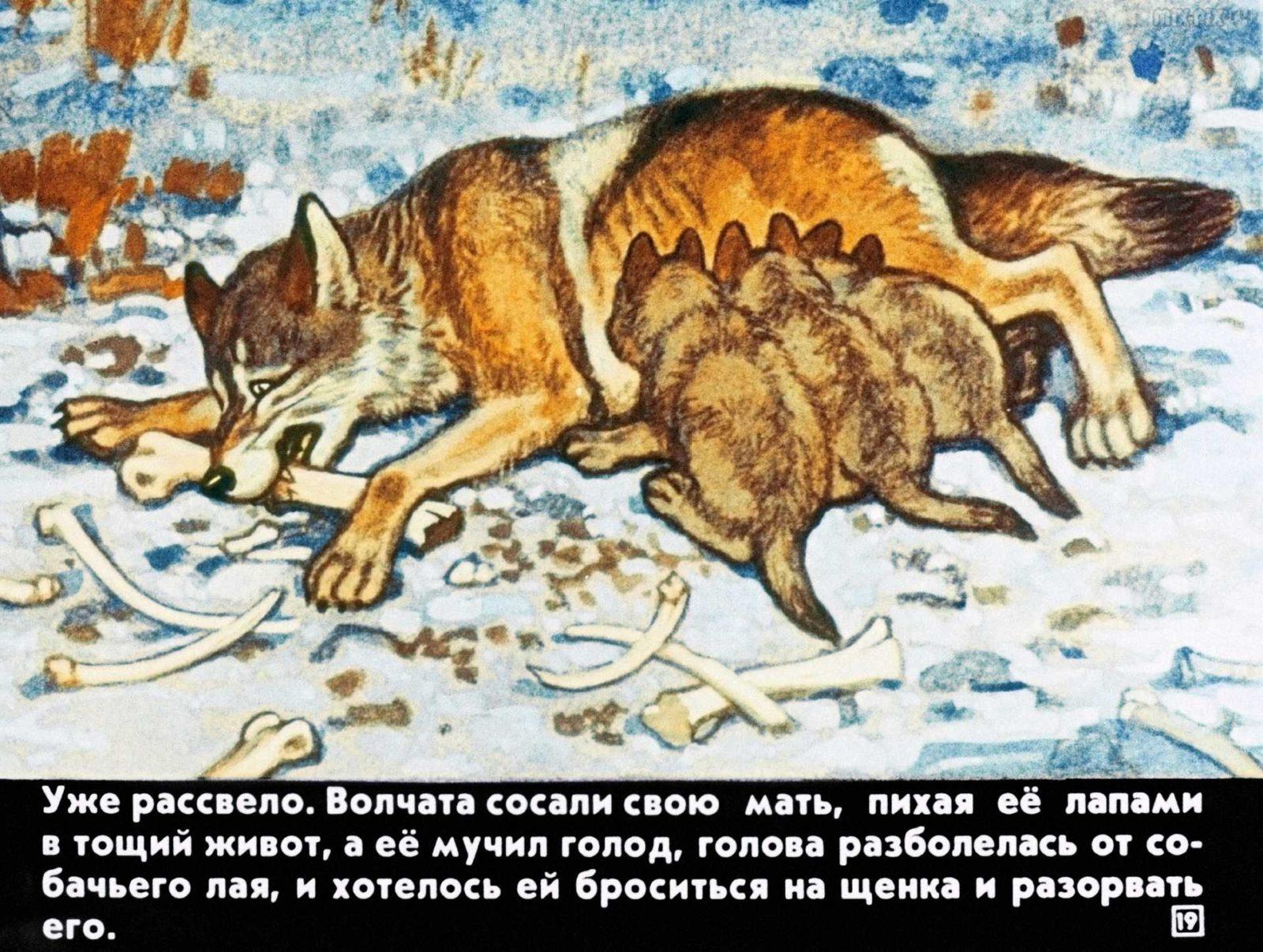 Белолобый (1988) 24