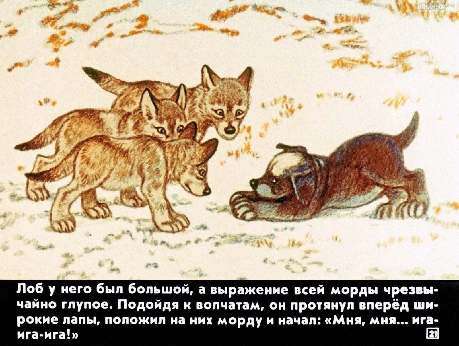 Белолобый (1988) 25
