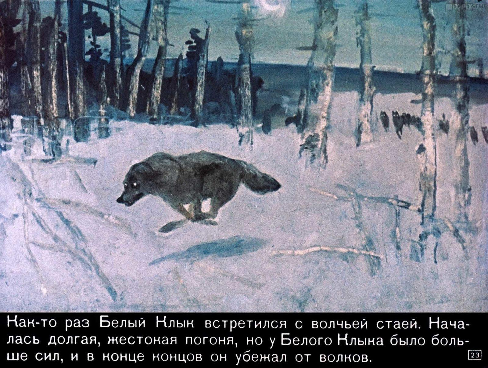 Белый клык (1969) 41