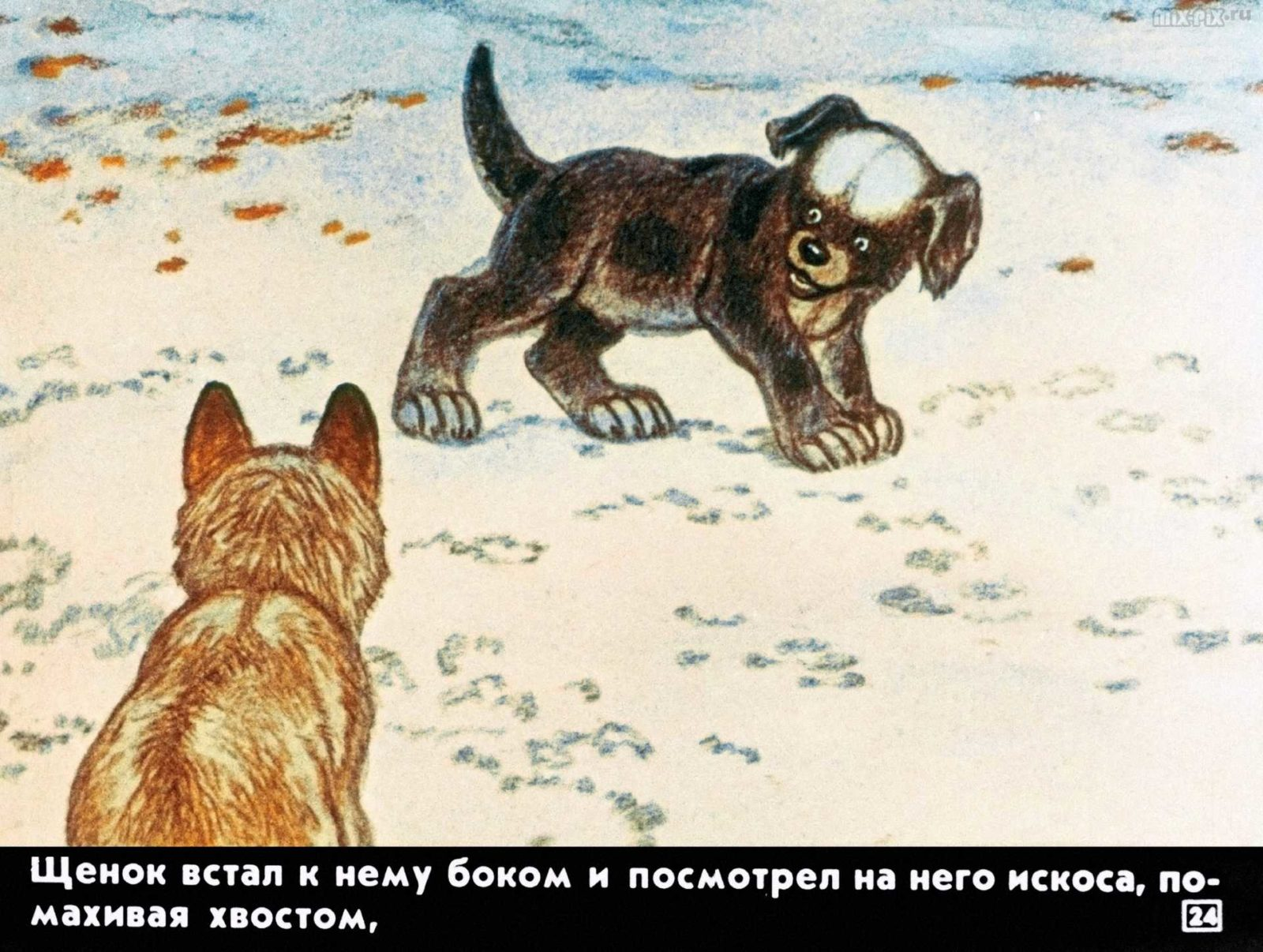 Белолобый (1988) 26