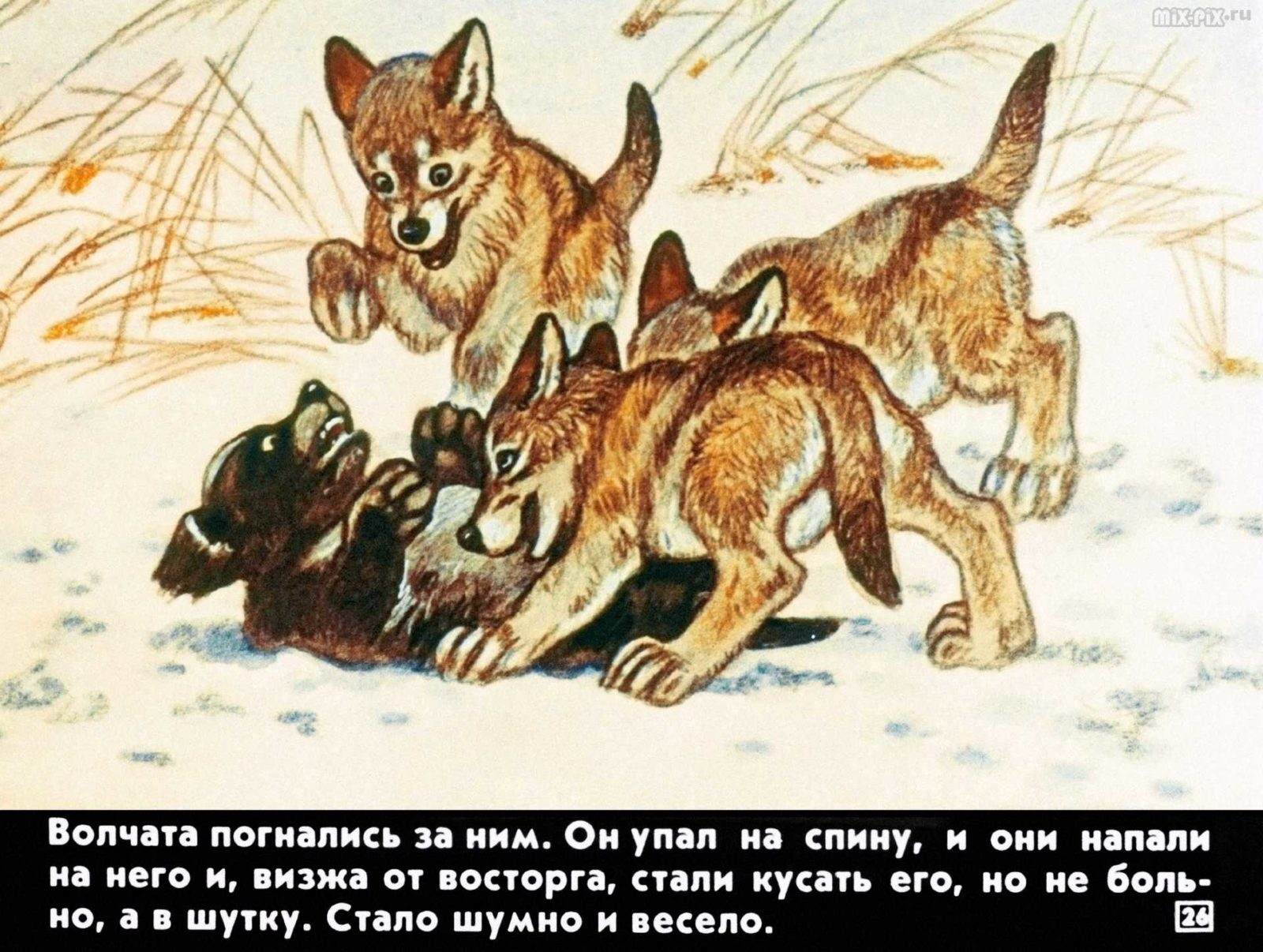 Белолобый (1988) 27