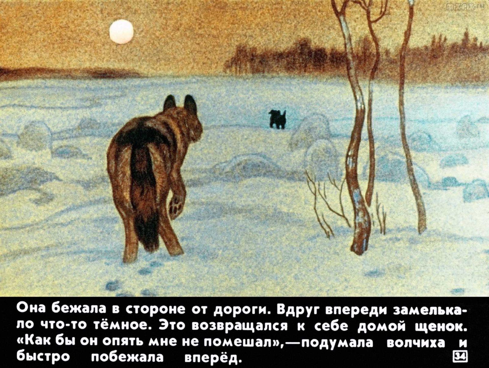 Белолобый (1988) 30