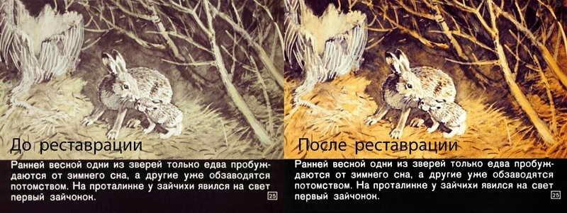 Диафильм - Кто как весну встречает (1969)