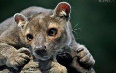 Самые удивительные и редкие животные нашей планеты Часть 2