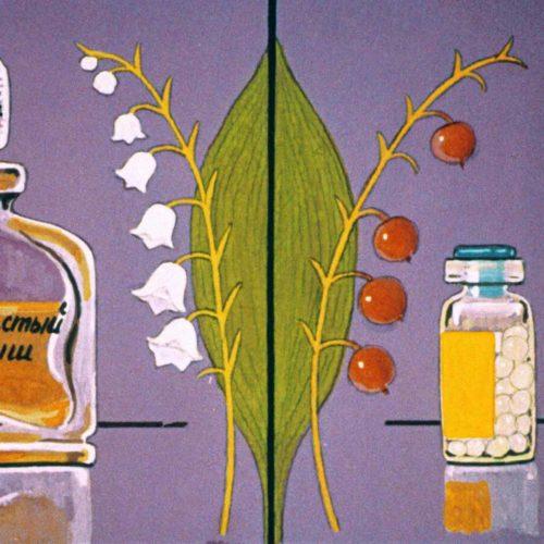 Класс однодольные растения (1992 г.)