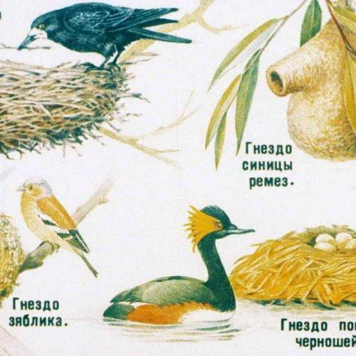 Класс птицы (1991)