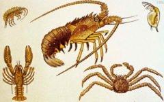 Классы  ракообразные и паукообразные (1988)