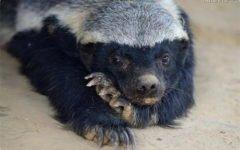 Самые удивительные и редкие животные нашей планеты Часть 1