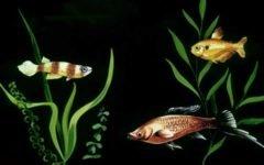Аквариумные рыбы содержание и уход (1991)