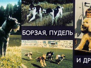 Борзая, пудель и другие (1990)
