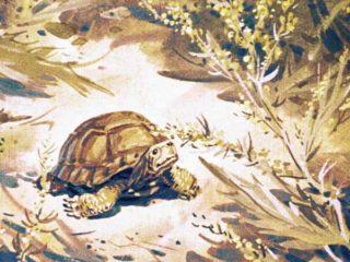 Пять дней из жизни черепахи