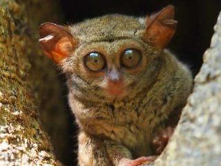 Самые удивительные и редкие животные нашей планеты. Часть 3