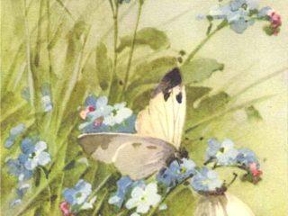 Катарина Кляйн (Catharina Klein, 1861 - 1929)