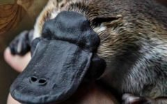 5 вымышленных животных, оказавшихся настоящими: от мифа к науке