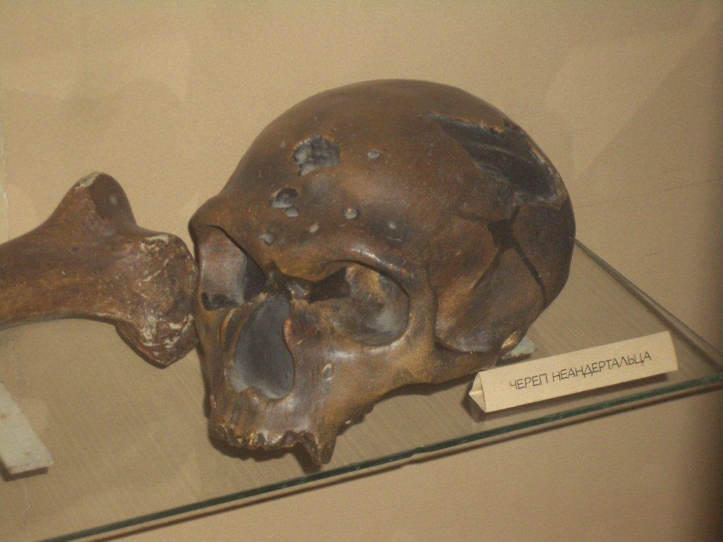 Неандертальцы как они жили и почему исчезли 3