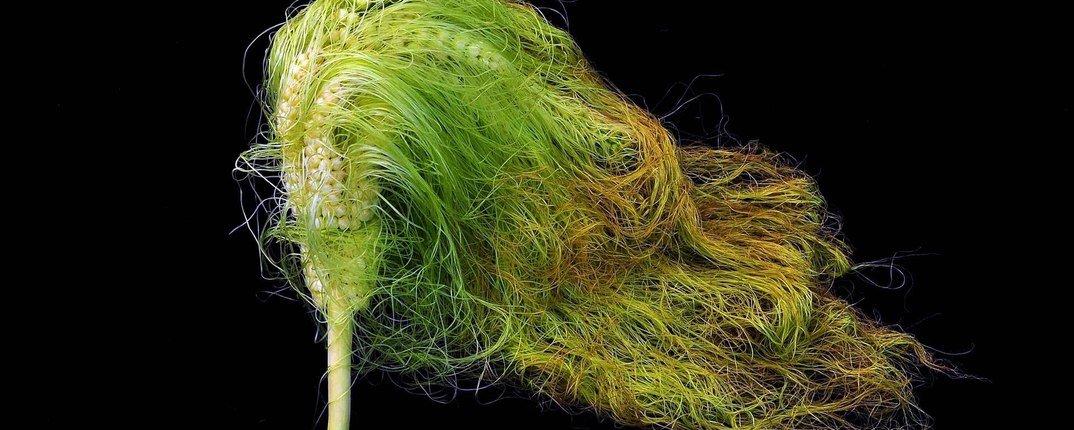Тайная жизнь растений они слышат, общаются и кричат