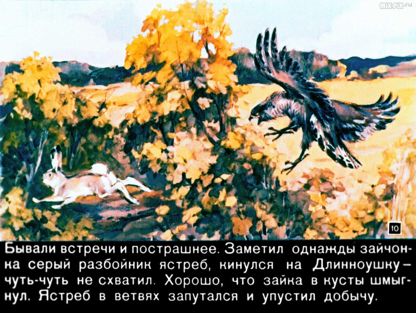 Зайкин год (1958) 35