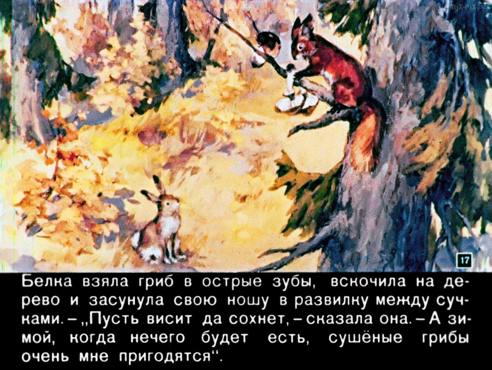 Зайкин год (1958) 41