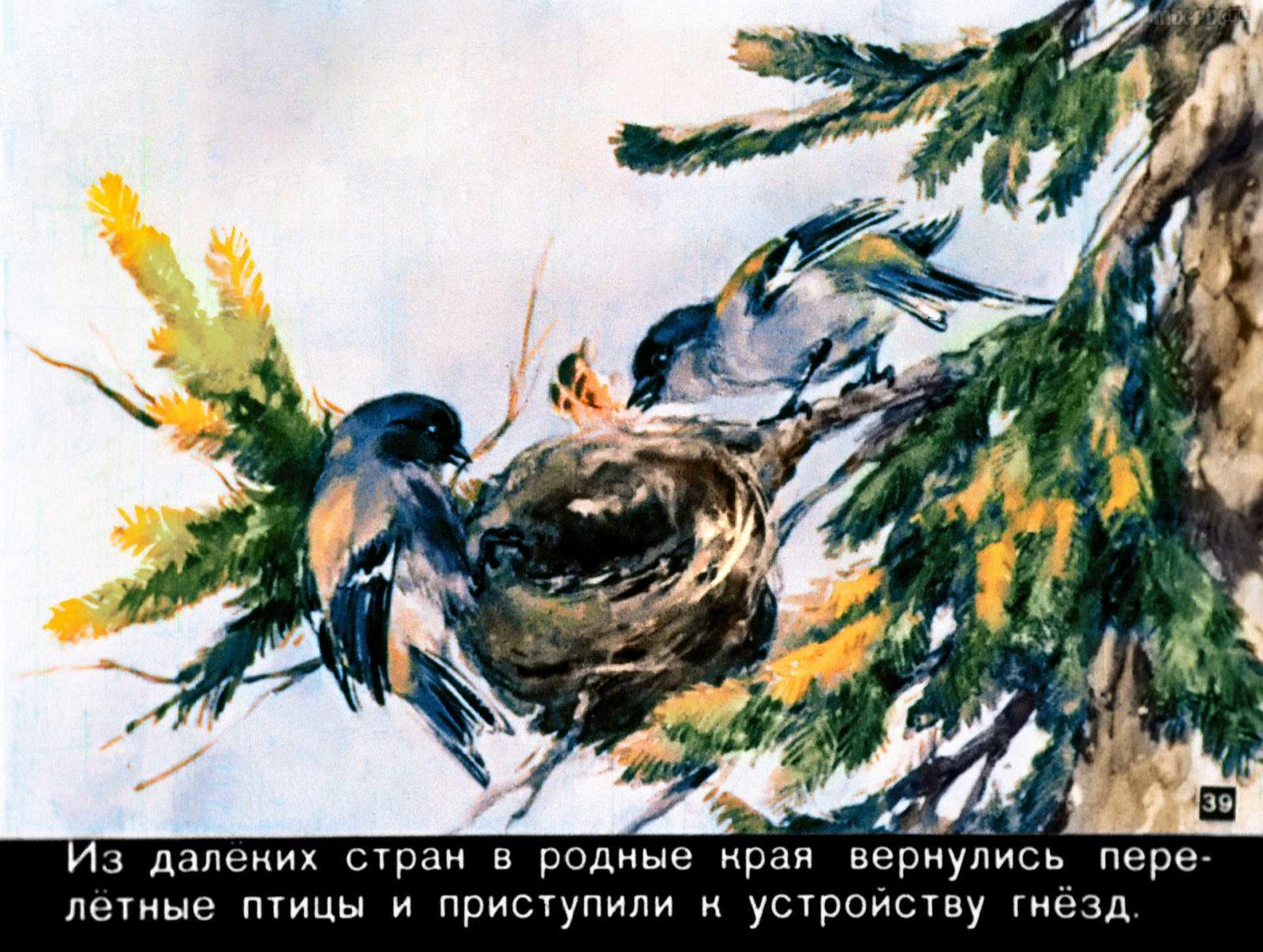 Зайкин год (1958) 55