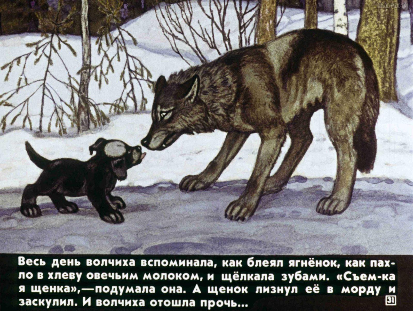 Белолобый (1988) 35