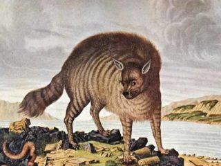 27 забавных иллюстраций: животные глазами европейцев прошлого