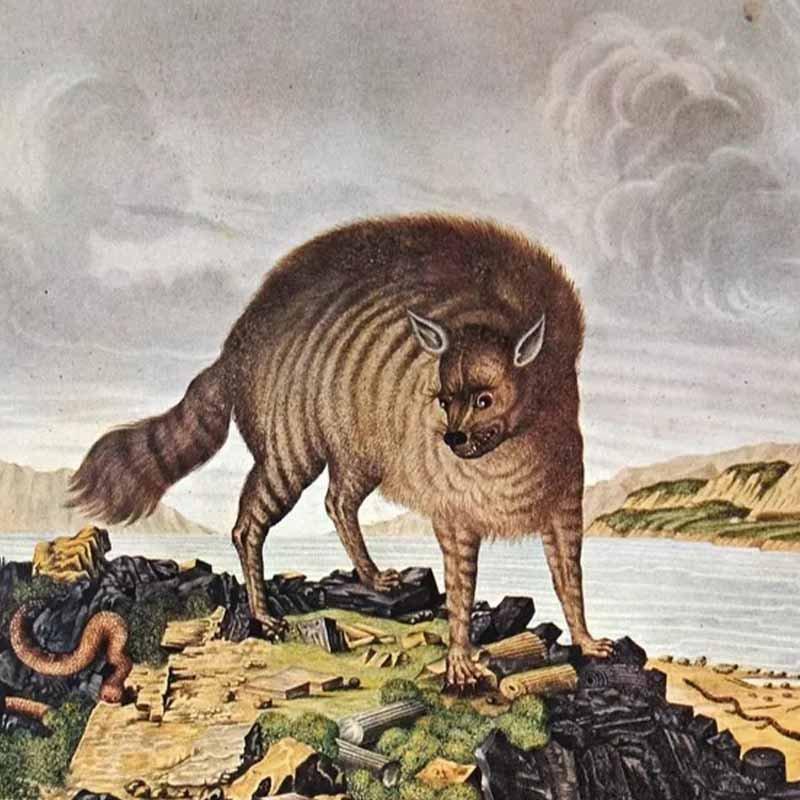 27 забавных иллюстраций: животные глазами европейцев прошлого 1
