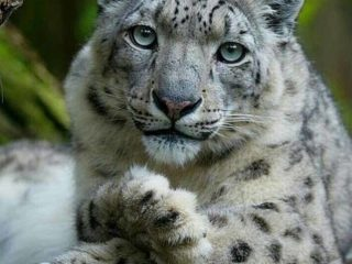 Редкие животные, которых осталось меньше 100 особей